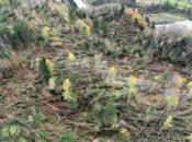 alberi-schiantati-vaia-2018