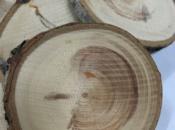 cerchi-legno-abete-bianco