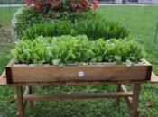 vasca-contenitore-in-legno-di-abete-bianco-per-orticoltura